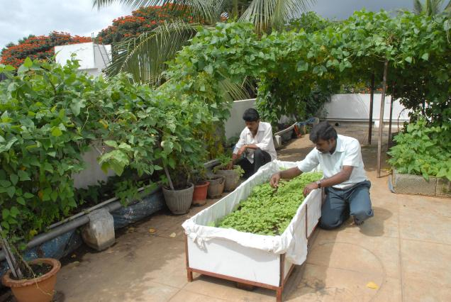 for Terrace vegetable garden by harikumar